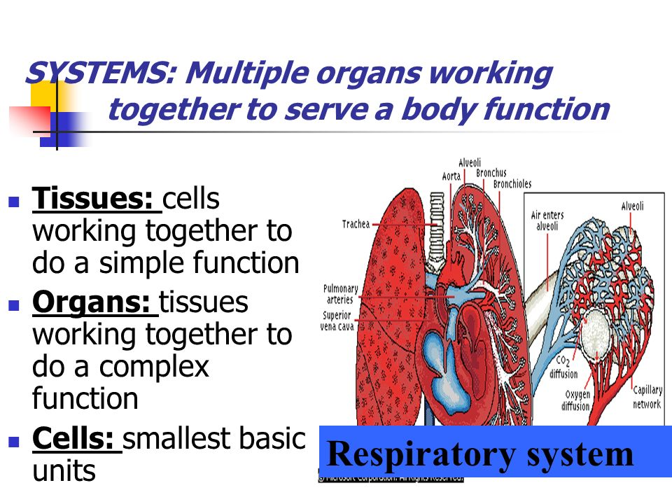 SYSTEMS: Multiple organs working together to serve a body function