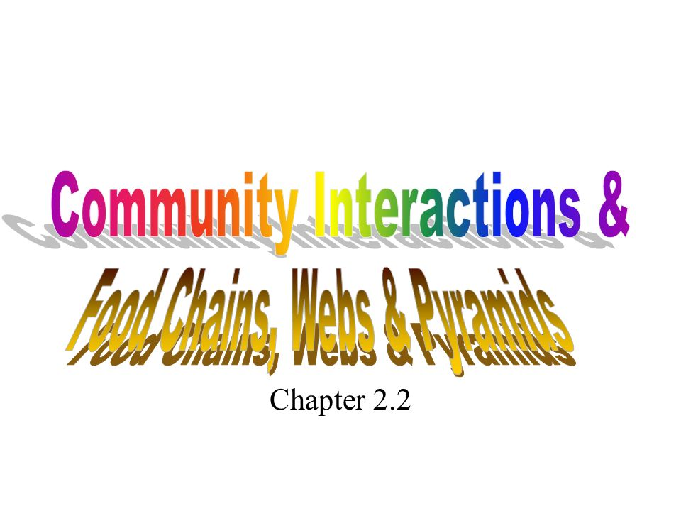 Community Interactions &