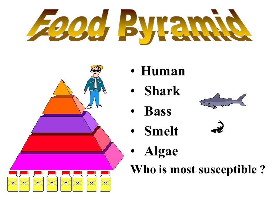 Food Pyramid Human Shark Bass Smelt Algae Who is most susceptible