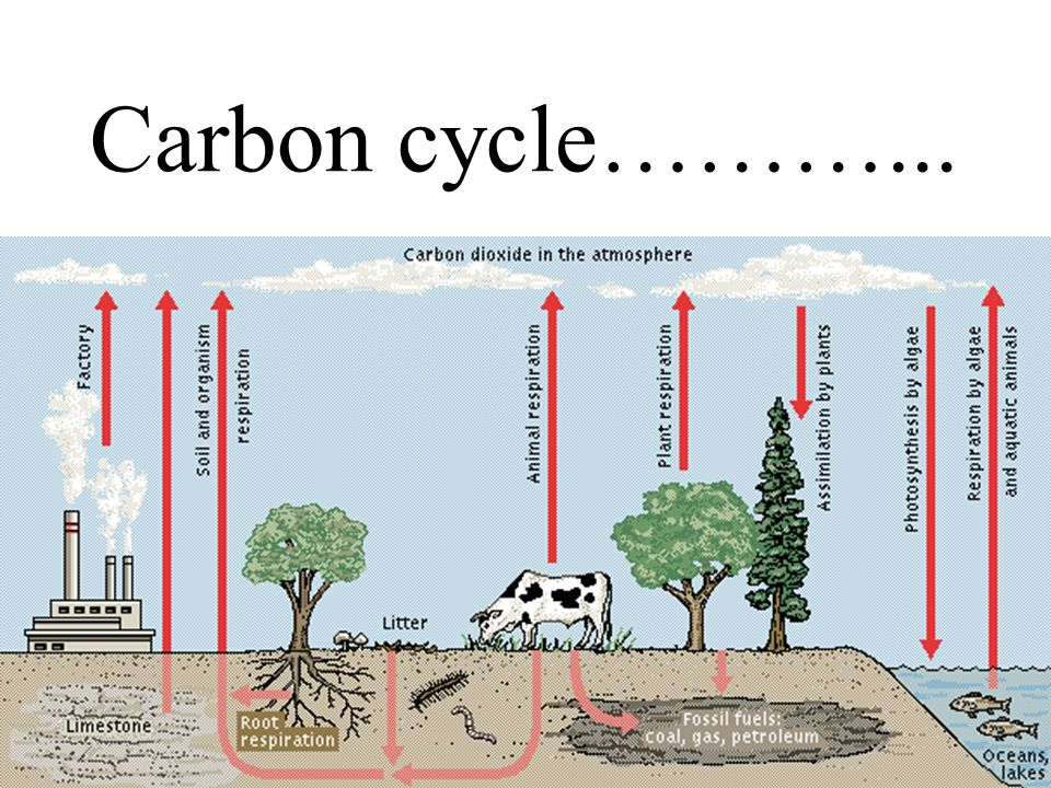 Carbon cycle………...