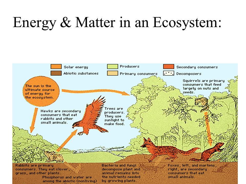 Energy & Matter in an Ecosystem: