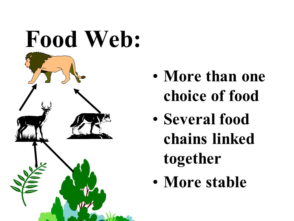 Food Web: More than one choice of food