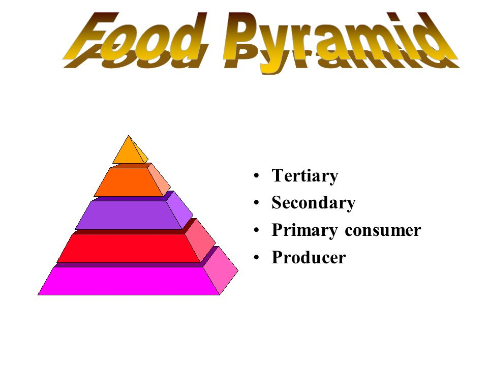 Food Pyramid Tertiary Secondary Primary consumer Producer