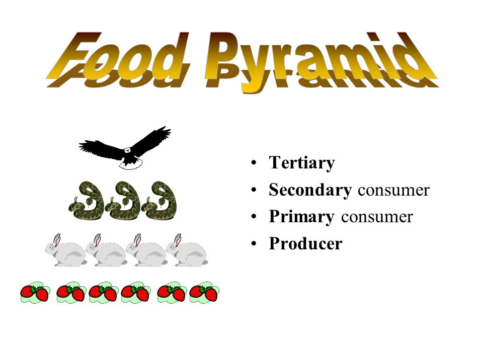 Food Pyramid Tertiary Secondary consumer Primary consumer Producer