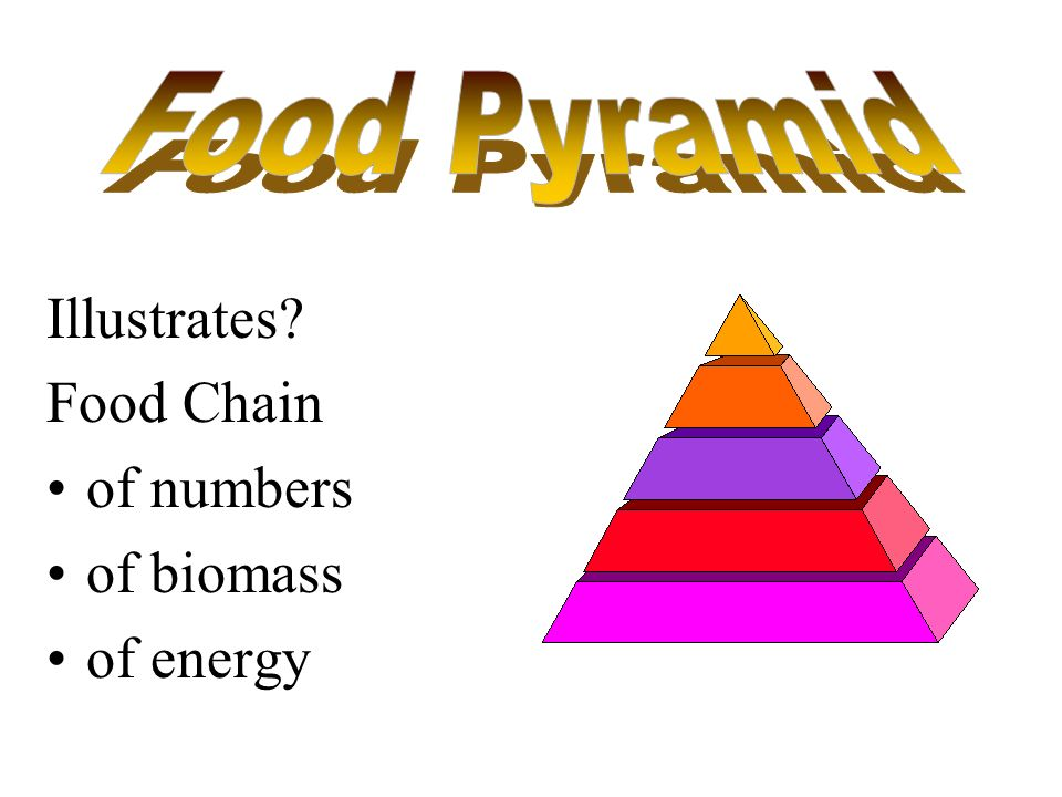 Food Pyramid Illustrates Food Chain of numbers of biomass of energy