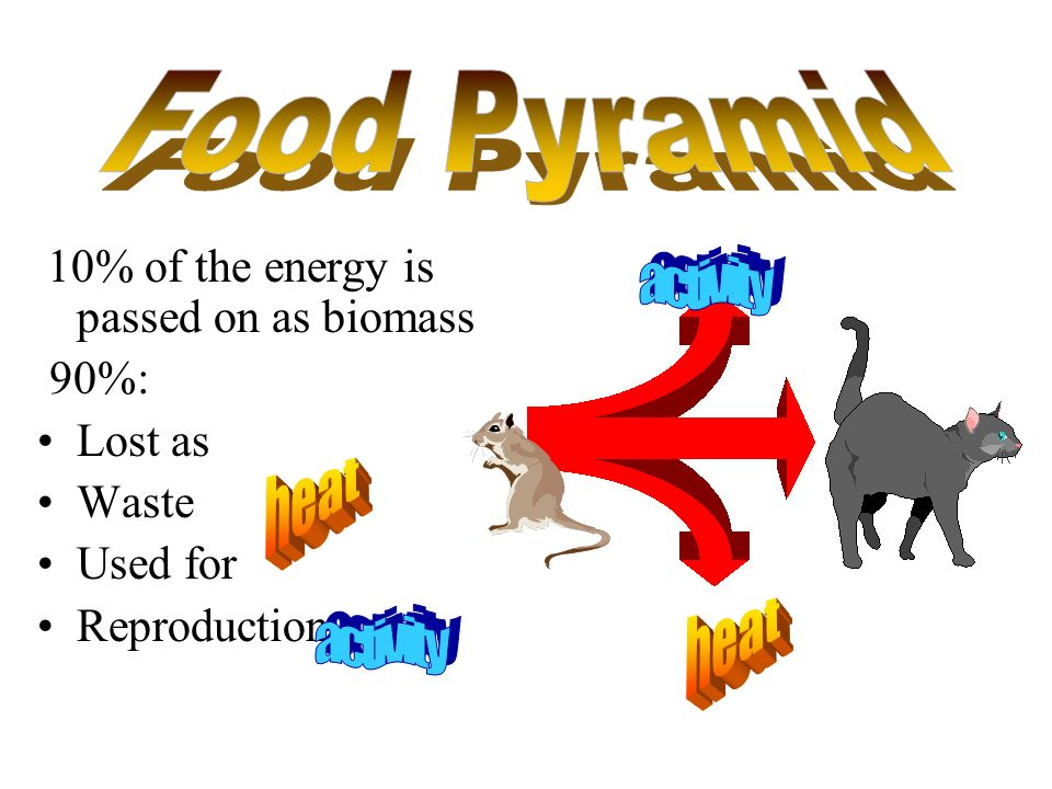 Food Pyramid activity heat heat activity 90%: Lost as Waste Used for