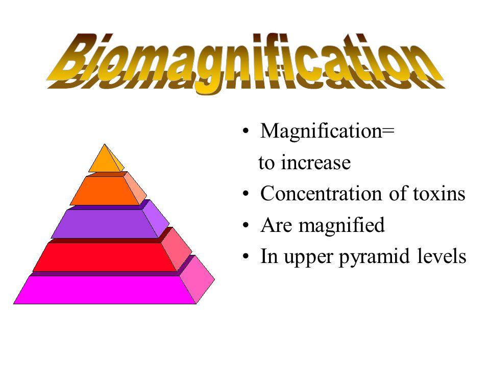 Biomagnification Magnification= to increase Concentration of toxins