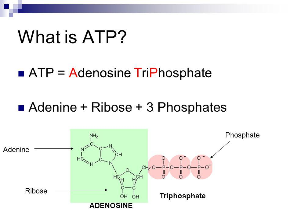 What is ATP ATP = Adenosine TriPhosphate
