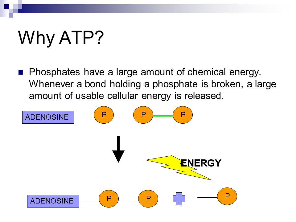 Why ATP