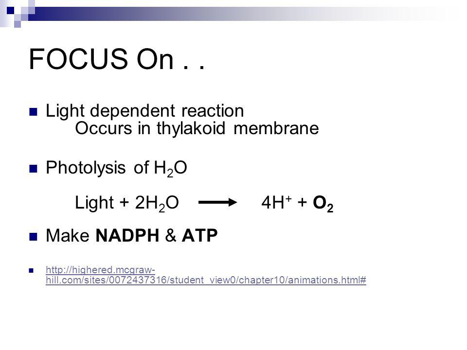 FOCUS On . . Light dependent reaction Occurs in thylakoid membrane