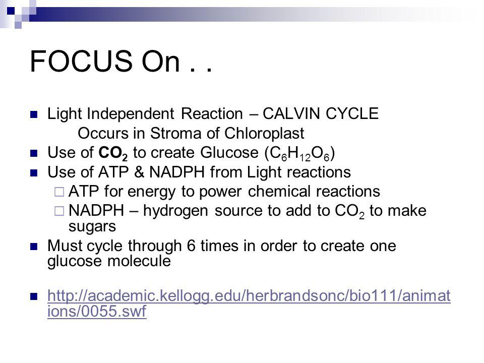 FOCUS On . . Light Independent Reaction – CALVIN CYCLE