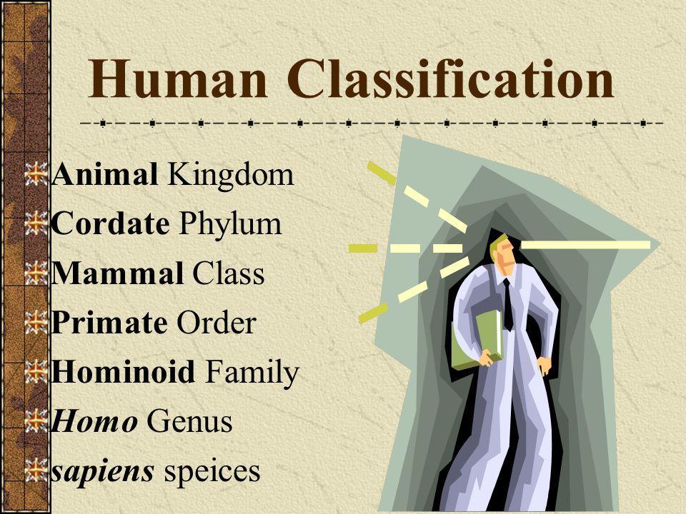Human Classification Animal Kingdom Cordate Phylum Mammal Class