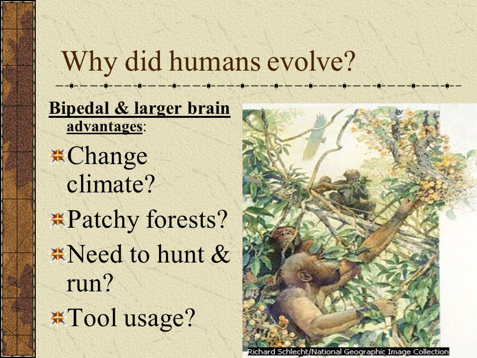 Why did humans evolve Change climate Patchy forests