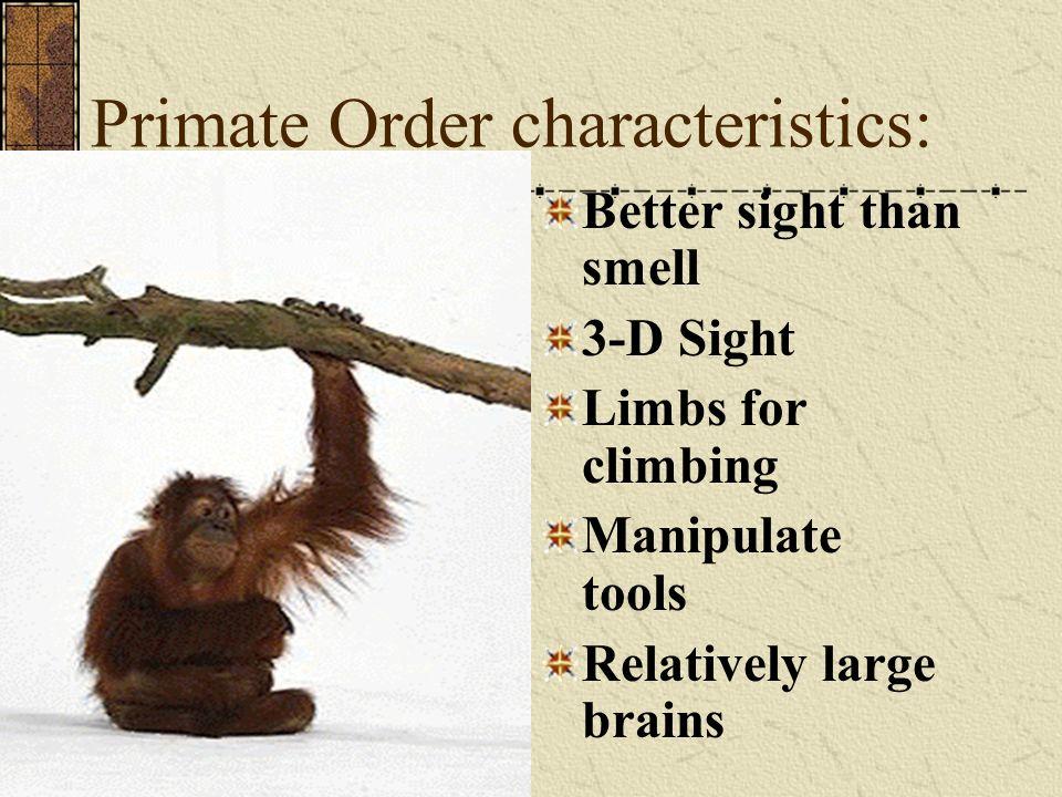 Primate Order characteristics:
