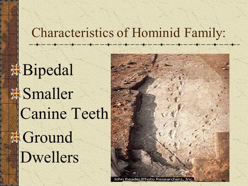 Characteristics of Hominid Family: