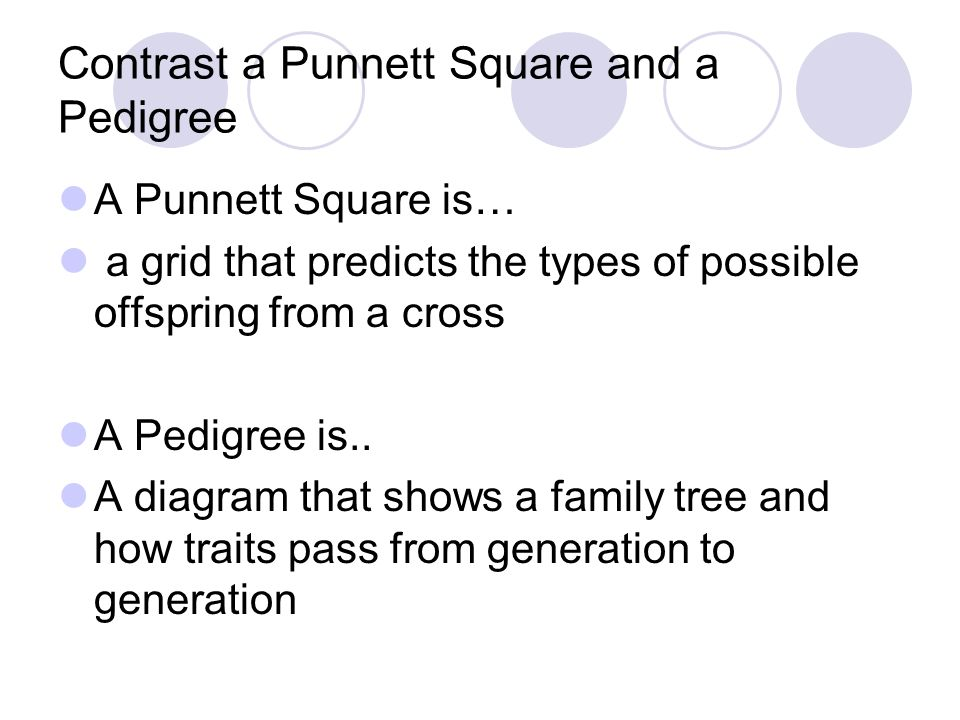 Contrast a Punnett Square and a Pedigree