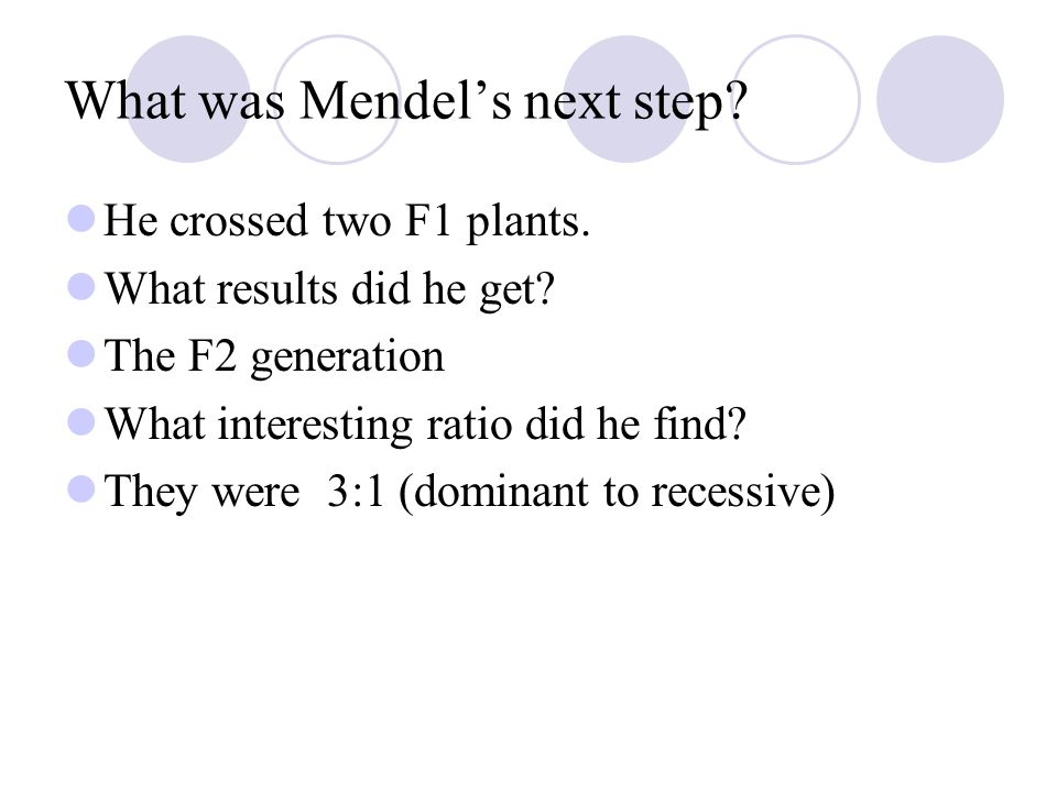 What was Mendel's next step