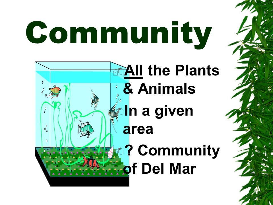 Community All the Plants & Animals In a given area