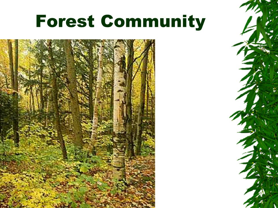 Forest Community …………..