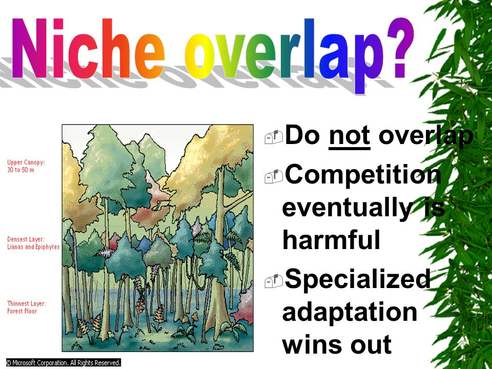 Niche overlap Do not overlap Competition eventually is harmful