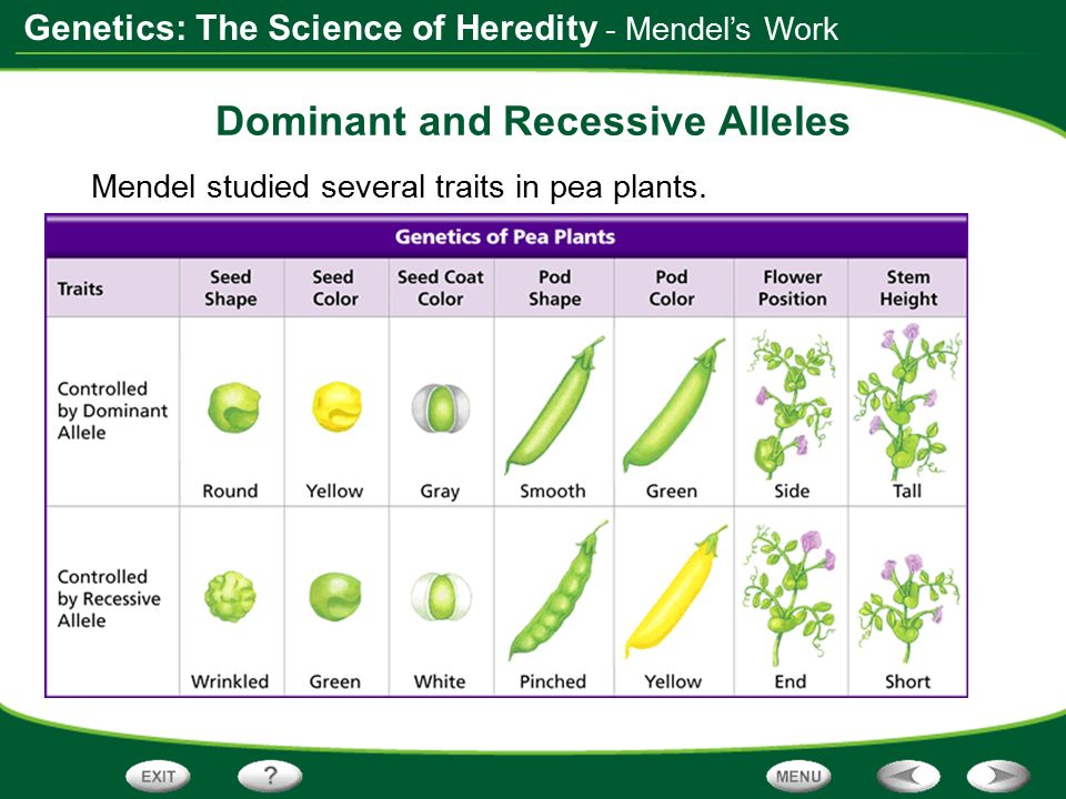 Dominant And Recessive Alleles Chart Table of Conten...