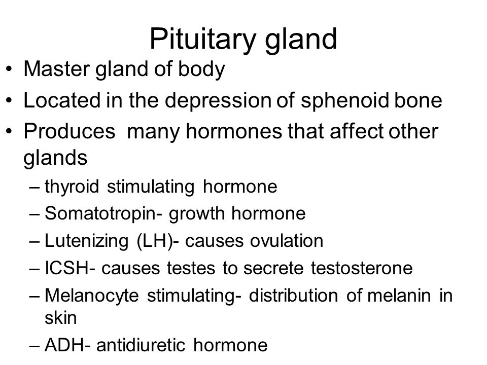 Pituitary gland Master gland of body