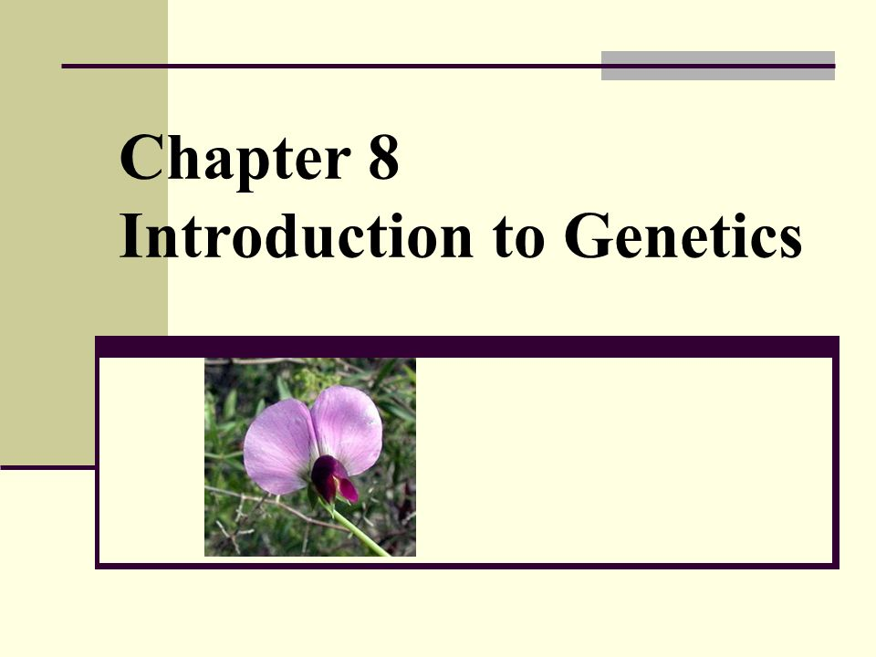 Chapter 8 Introduction to Genetics