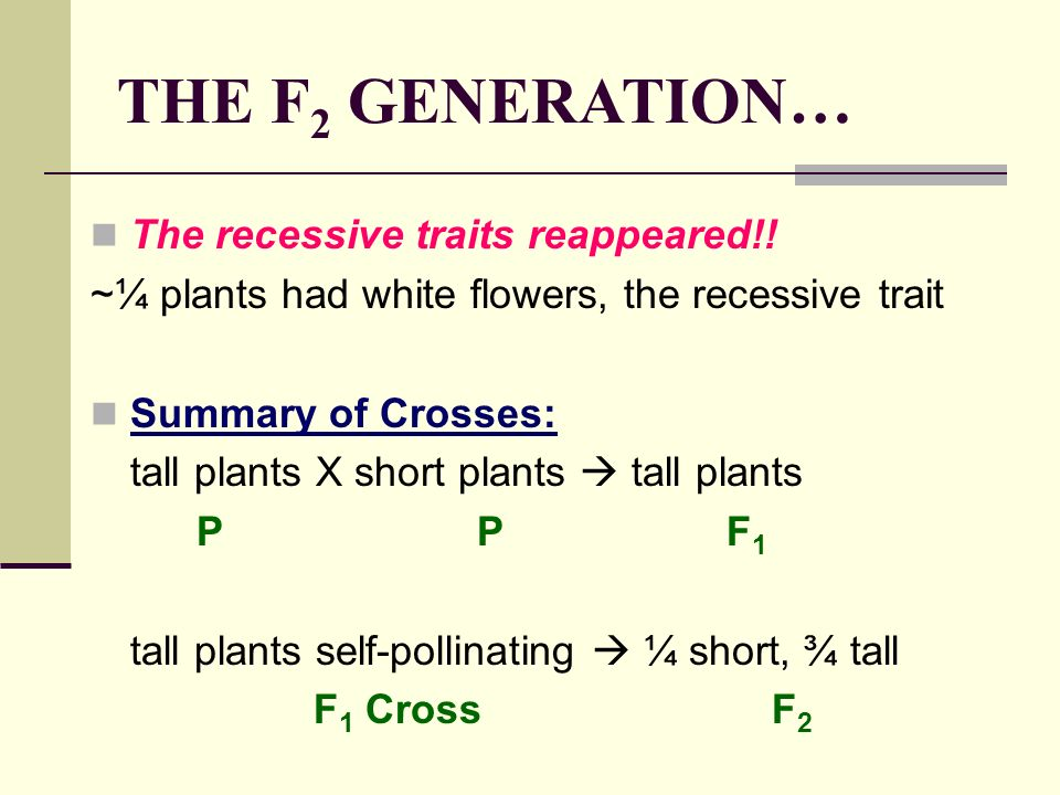 THE F2 GENERATION… The recessive traits reappeared!!