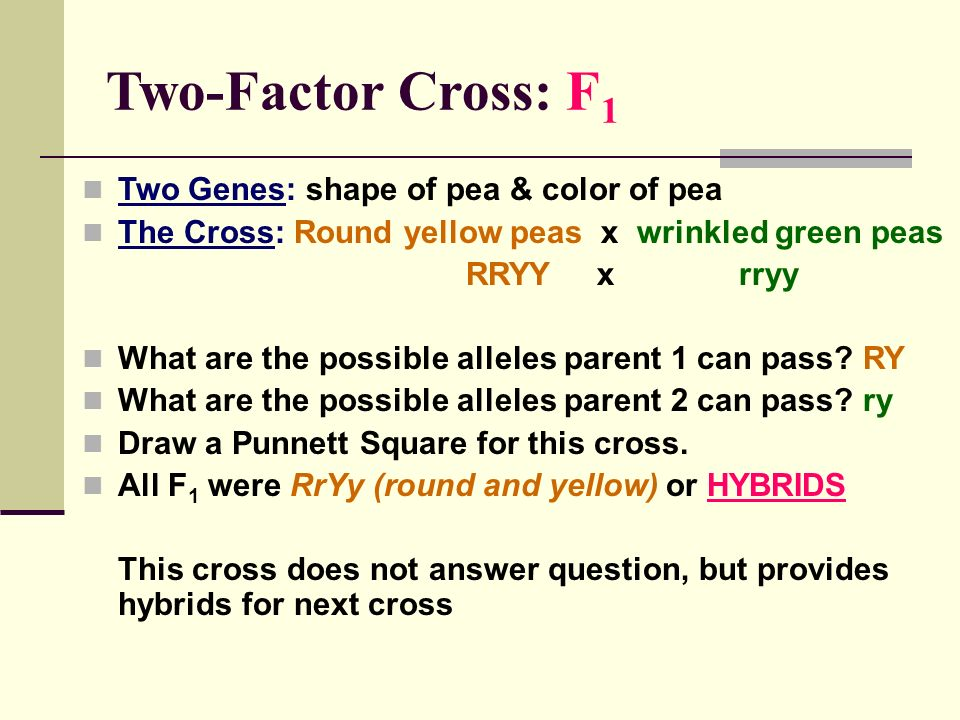 Two-Factor Cross: F1 Two Genes: shape of pea & color of pea