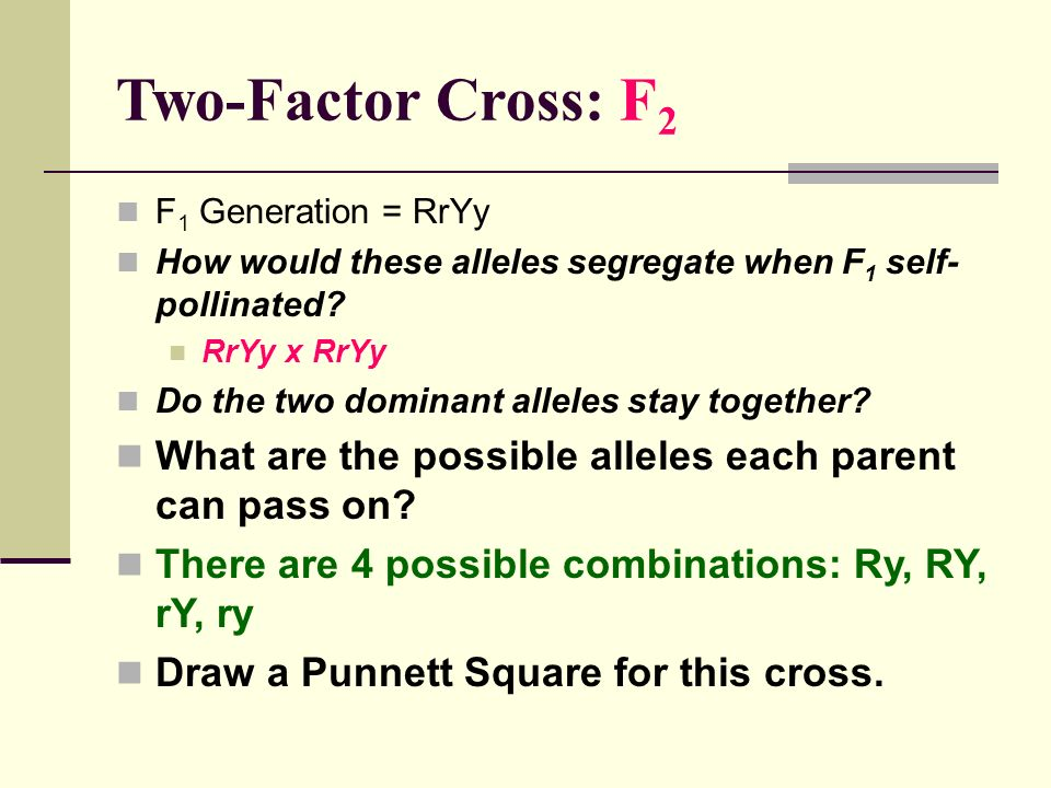 Two-Factor Cross: F2 F1 Generation = RrYy. How would these alleles segregate when F1 self-pollinated