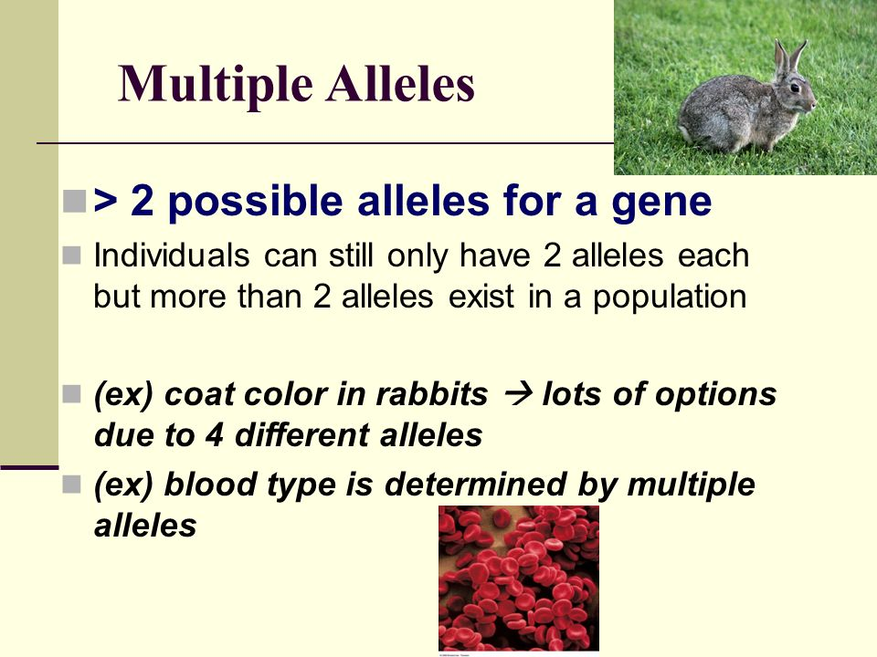 Multiple Alleles > 2 possible alleles for a gene
