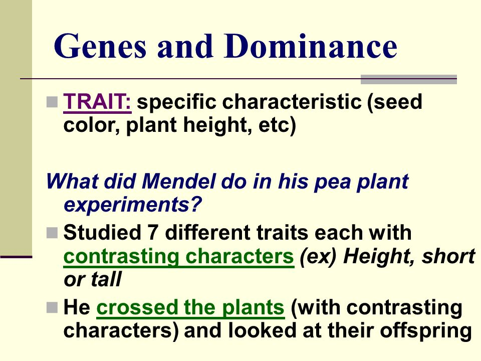 Genes and Dominance TRAIT: specific characteristic (seed color, plant height, etc) What did Mendel do in his pea plant experiments