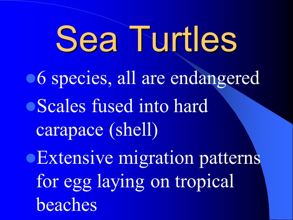 Sea Turtles 6 species, all are endangered