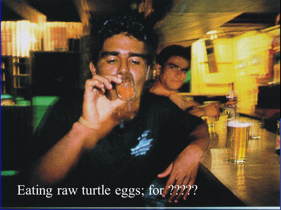 Eating raw turtle eggs; for
