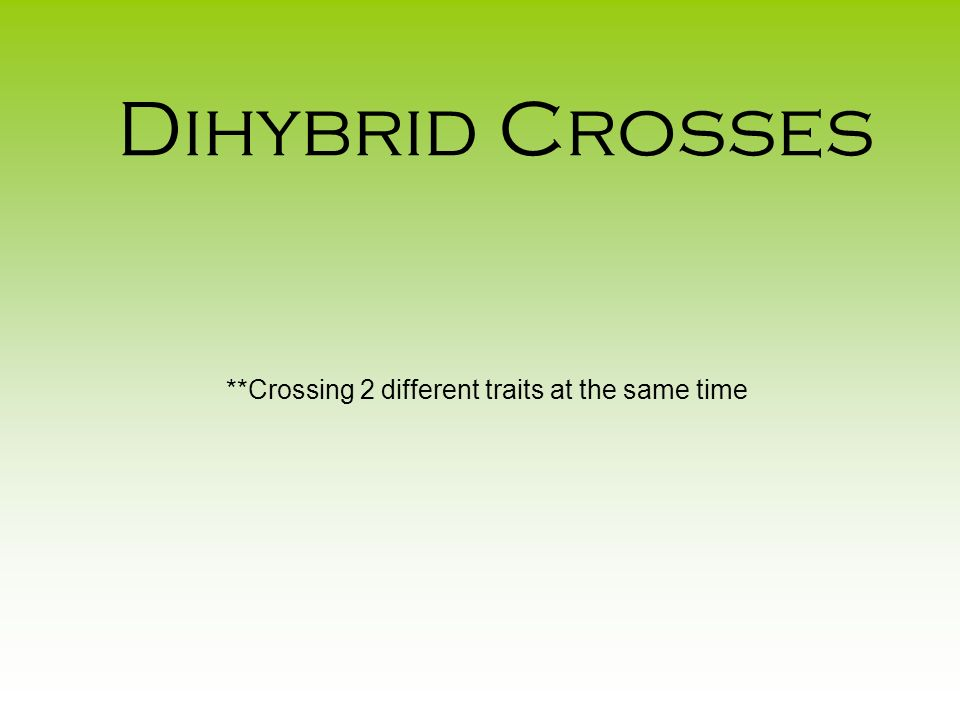 Dihybrid Crosses **Crossing 2 different traits at the same time