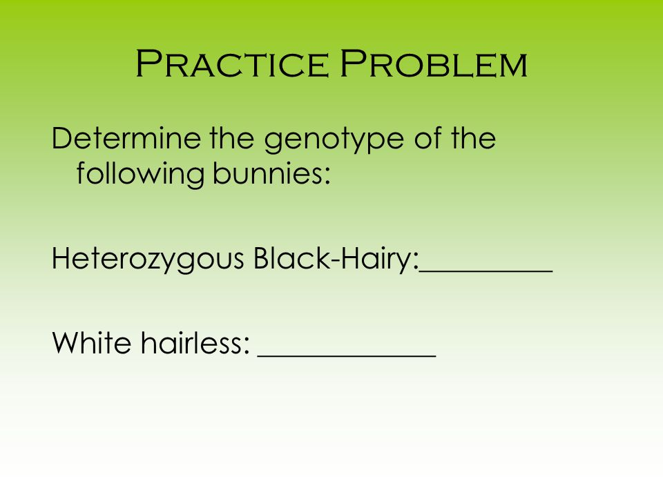 Practice Problem Determine the genotype of the following bunnies: