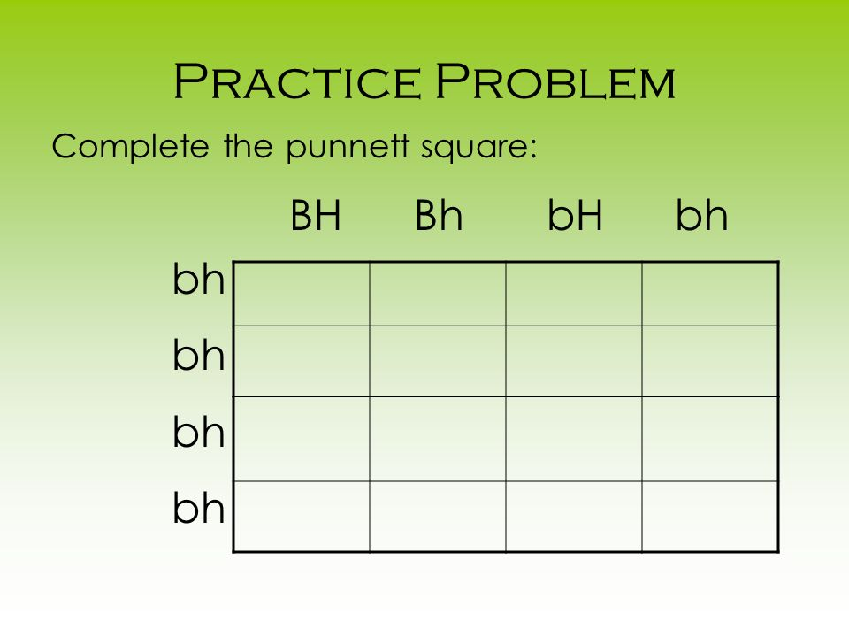 Practice Problem Complete the punnett square: BH Bh bH bh bh