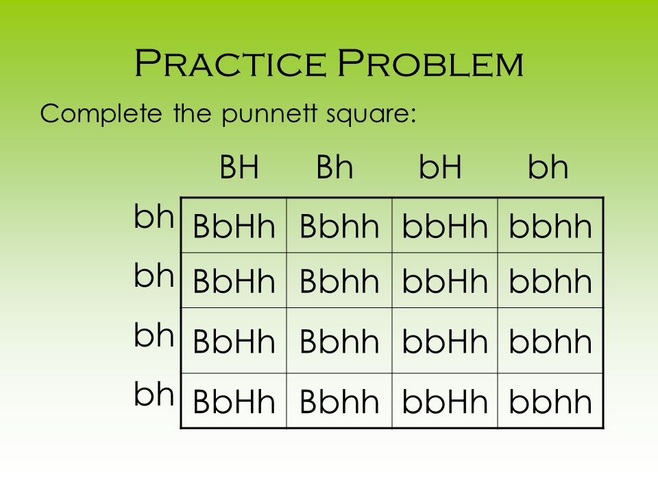 Practice Problem BH Bh bH bh bh BbHh Bbhh bbHh bbhh