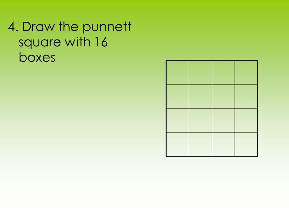 4. Draw the punnett square with 16 boxes