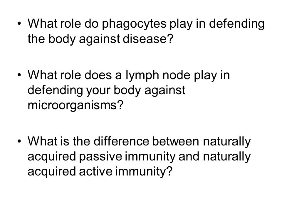 What role do phagocytes play in defending the body against disease