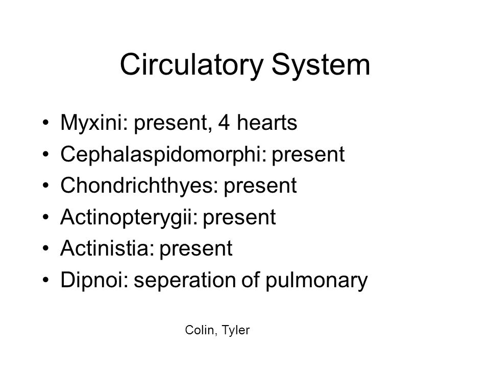 Circulatory System Myxini: present, 4 hearts