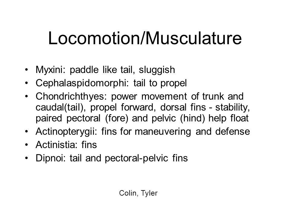 Locomotion/Musculature