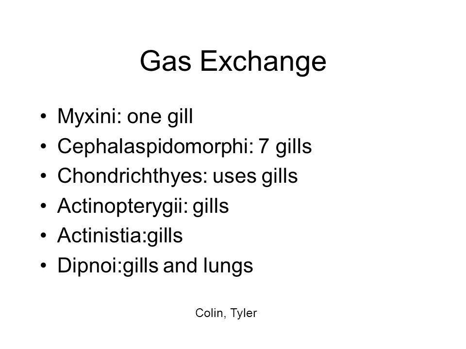 Gas Exchange Myxini: one gill Cephalaspidomorphi: 7 gills