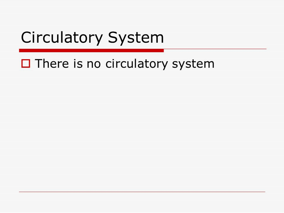 Circulatory System There is no circulatory system