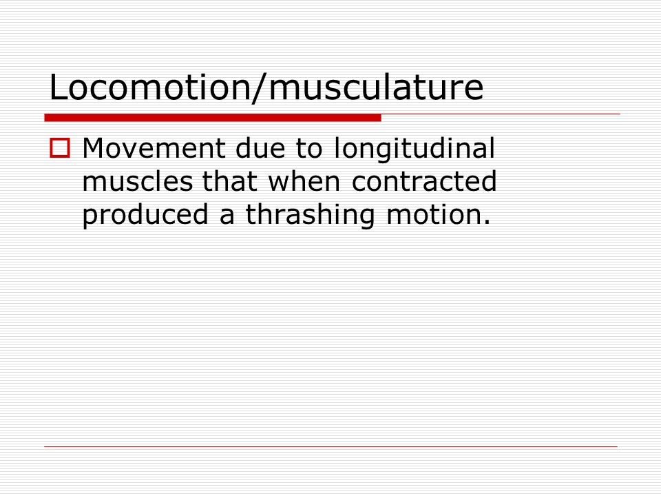 Locomotion/musculature