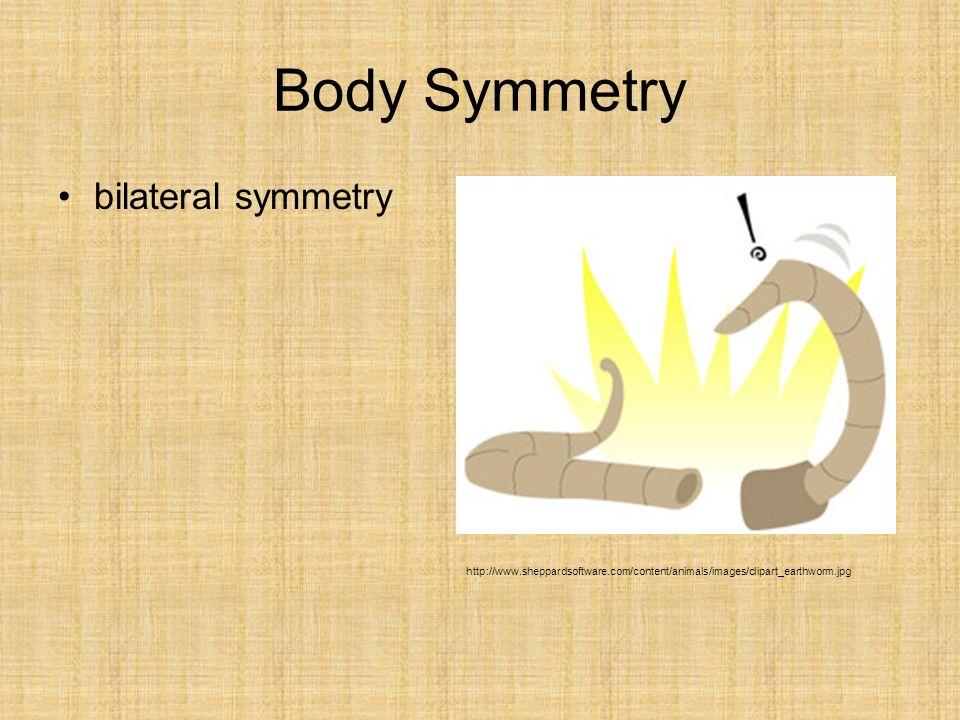 Body Symmetry bilateral symmetry