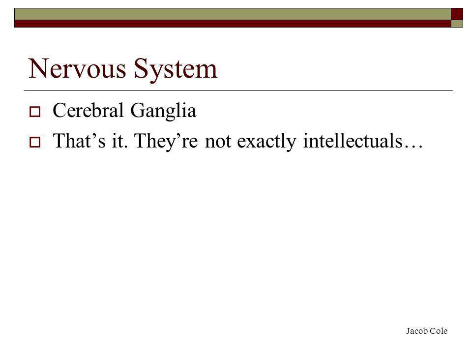 Nervous System Cerebral Ganglia