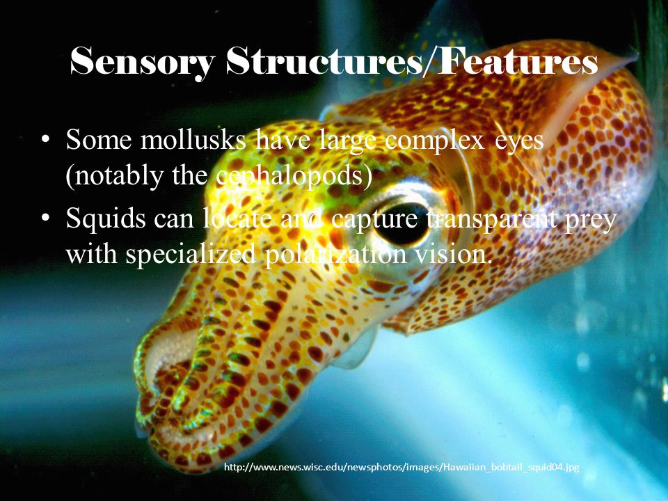 Sensory Structures/Features