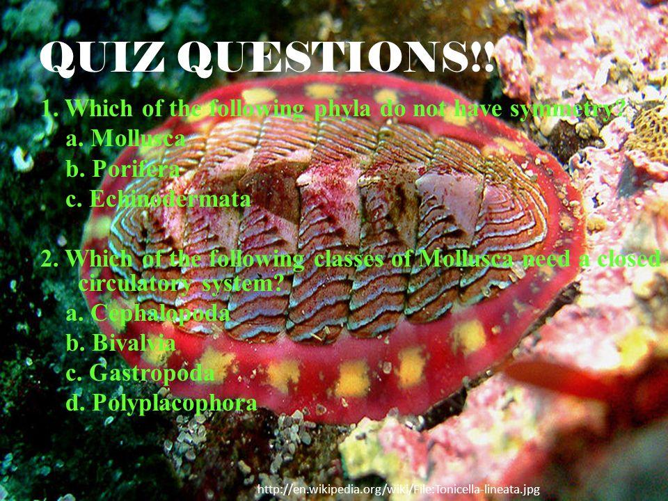 QUIZ QUESTIONS!!
