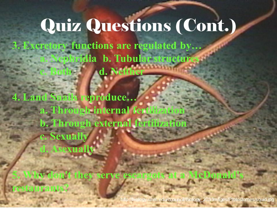 Quiz Questions (Cont.) 3. Excretory functions are regulated by…
